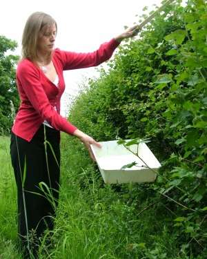 Wildlife in hedgerows suffers when next to roads or pavements