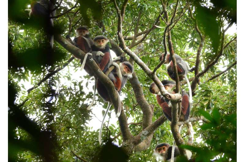 Gut biome of monkeys found to change when they are kept in captivity