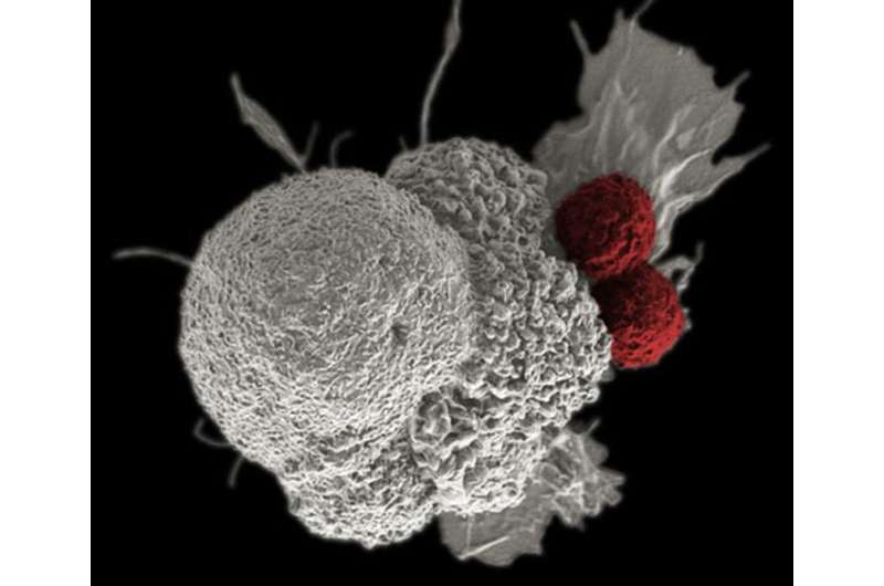 Molecular switch controlling immune suppression may help turn up immunotherapies