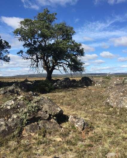 Revealing the science of Aboriginal fermentation