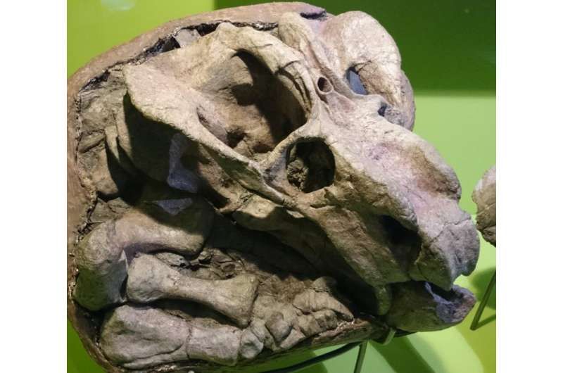 What our ancestors' third eye reveals about the evolution of mammals to warm blood