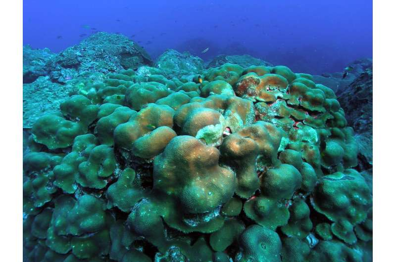 Coral genomes reveal how populations rebound after environmental catastrophes