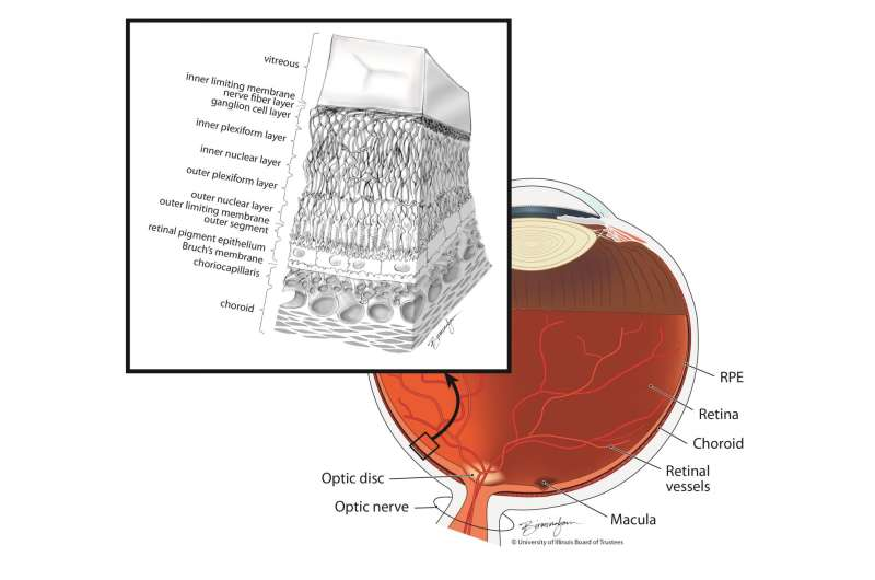 Clinical trial tests cord-blood cells to treat macular degeneration