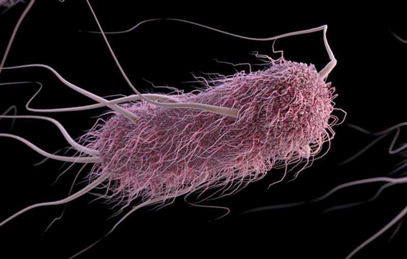 Computer model is 'crystal ball' for E. coli bacteria