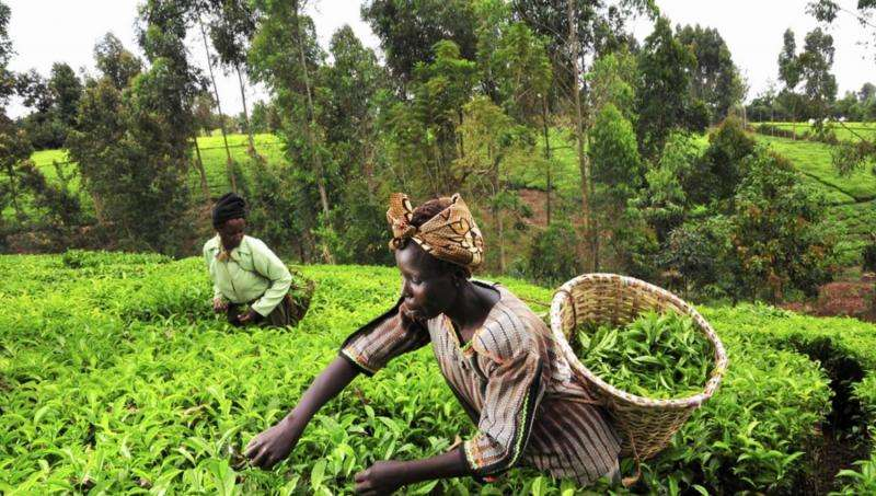 Deep-learning app diagnoses crop diseases