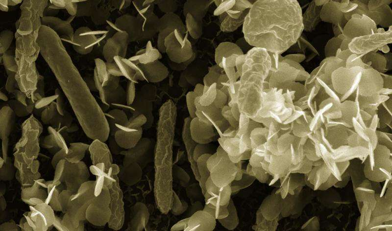 Newly discovered organic nanowires leave manmade technologies in their dust