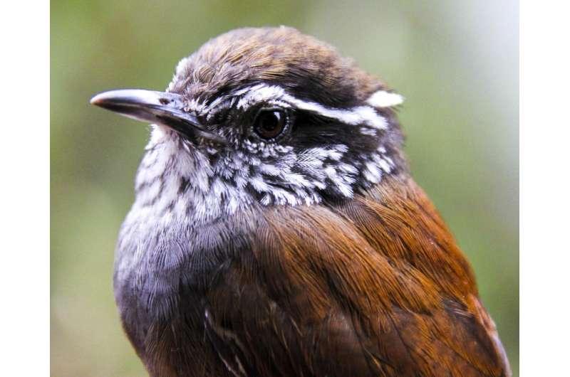 Remote sensing data reveals hundreds more species at risk of extinction