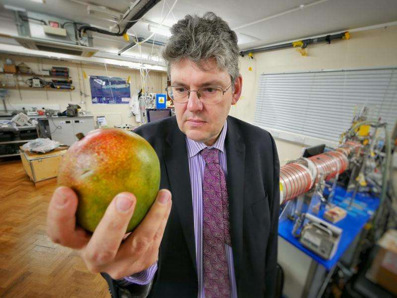 Scientists identify way to 'sniff' ripeness of mangos