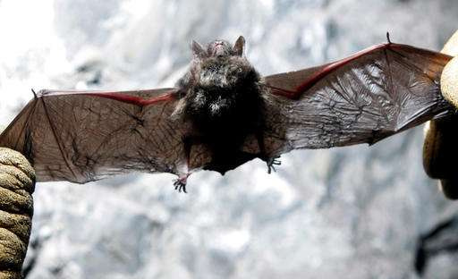 Scientists look at hangers-on amid mass die-off of bats