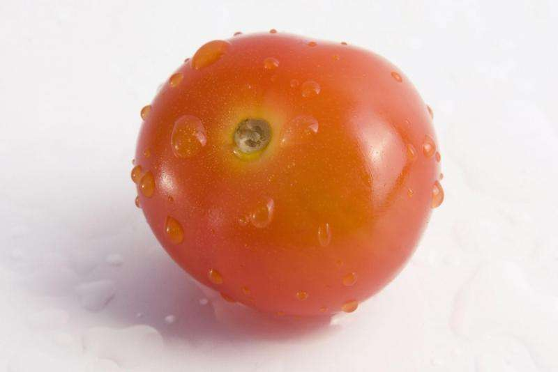 Researchers develop method to produce sweeter, well-growing tomatoes