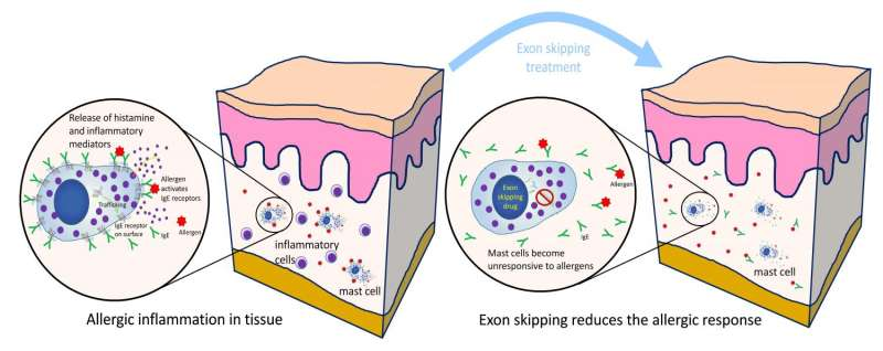 New treatment for allergic response targets mast cells