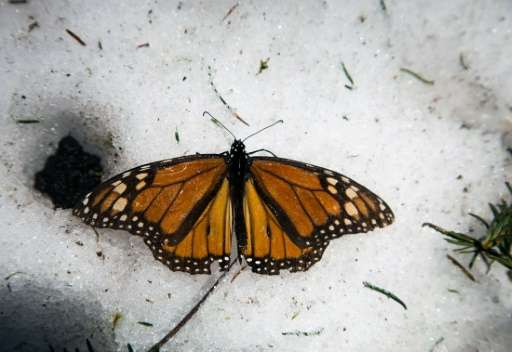 North American governments have taken steps since last year to protect the monarch butterfly, which crosses Canada and the Unite