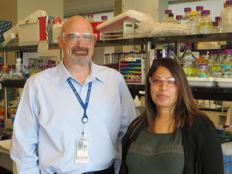Researchers develop first high-gravity, one-pot process for producing cellulosic ethanol