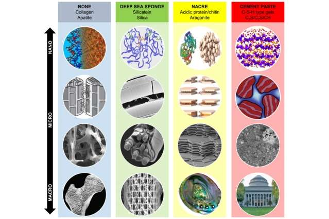 Researchers look to bones and shells as blueprints for stronger, more durable concrete