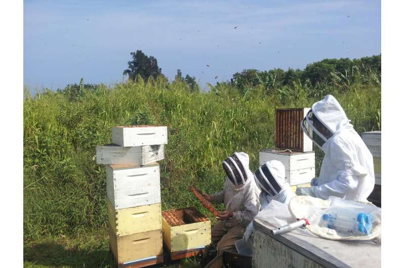 Study highlights a new threat to bees worldwide