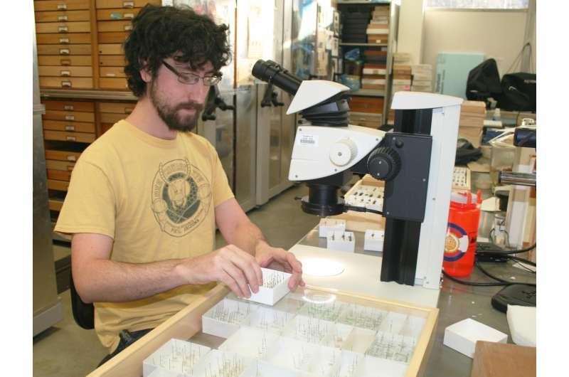 Utah State University entomologist Zach Portman examines desert bee species in his lab.
