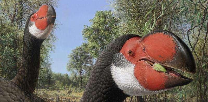 A case of mistaken identity for Australia's extinct big bird