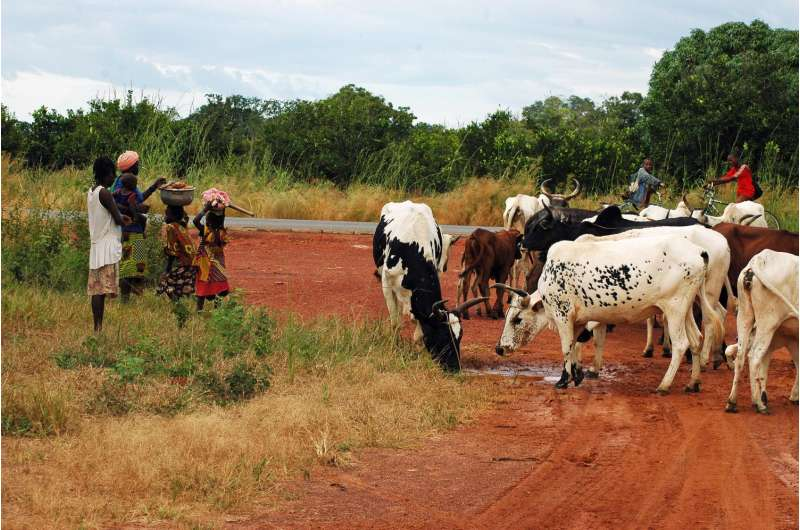 A chromosome anomaly may cause malaria-transmitting mosquito to prefer feeding on cattle