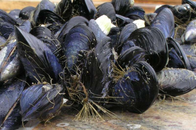 Acid attack -- can mussels hang on for much longer?