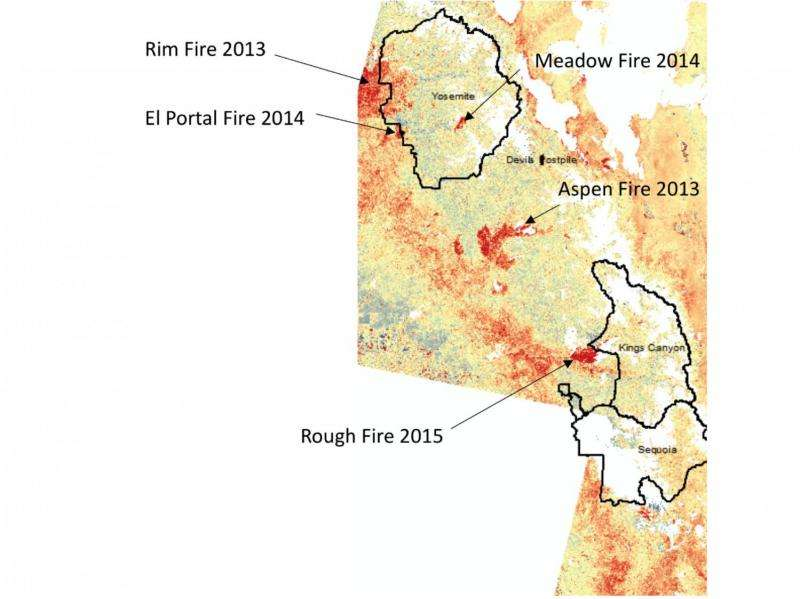 Aerial images show decades of foothill forest growth erased due to California's extreme drought