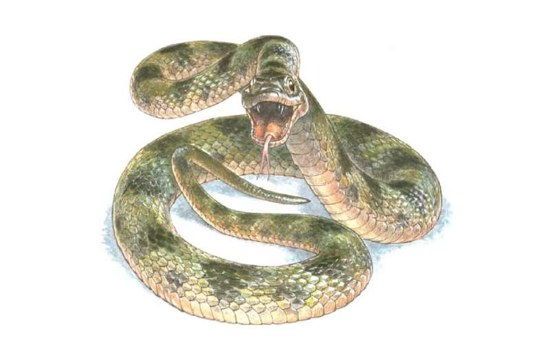 A fossilized snake shows its true colors