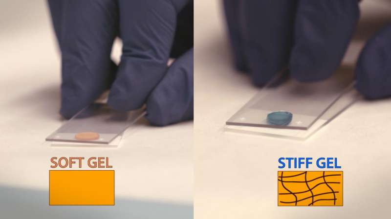 After the heart attack: Injectable gels could prevent future heart failure (video)
