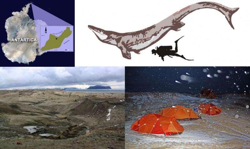 A giant predatory lizard swam in Antarctic seas near the end of the dinosaur age