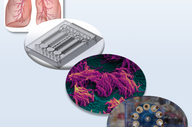 Airway-on-a-chip could lead to new treatments for cigarette smoke-induced lung injury