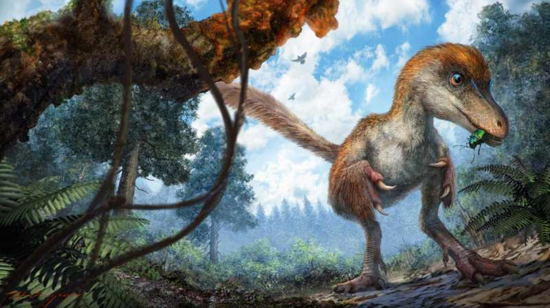 Amber specimen offers rare glimpse of feathered dinosaur tail