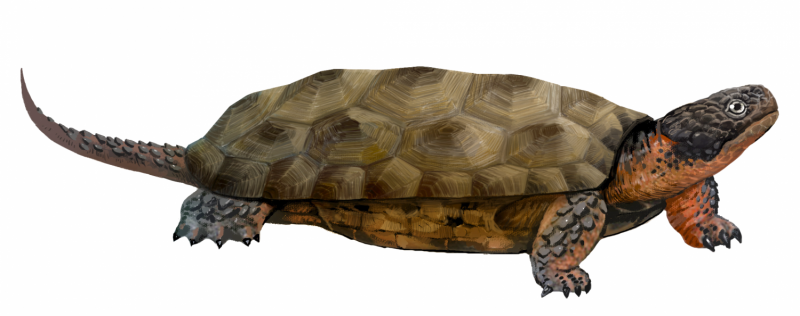 Ancient toothed turtles survived until 160m years ago
