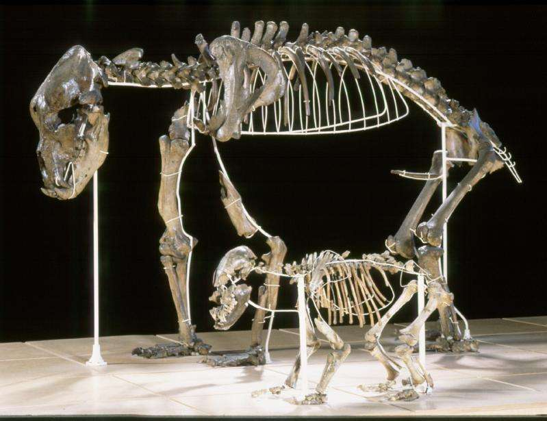 An inflexible diet led to the disappearance of the cave bear