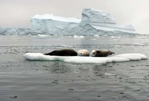 Antarctica has some of the last intact marine ecosystems in the world, home to penguins, seals, Antarctic toothfish, and whales