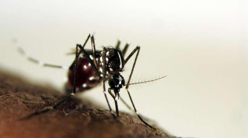 Antibody test gauges mosquito exposure
