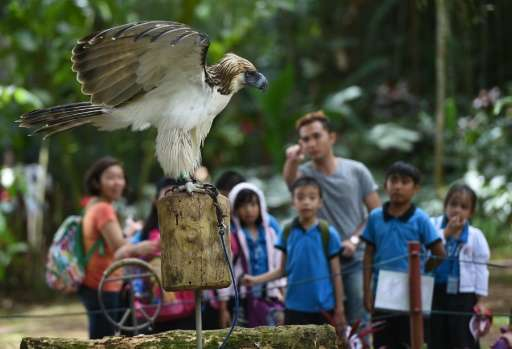 "A Philippine eagle named ""Fighter"" is missing nearly half of his left wing from a gun shot injury so would not survive"
