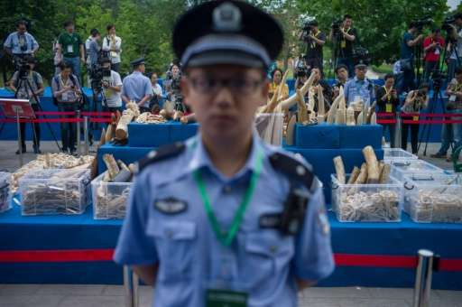A policeman stands in front of ivory items shown to the media before being destroyed in Beijing on May 29, 2015