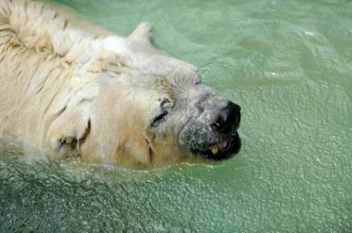 Arturo the polar bear was the latest of more than 60 animals to die over recent months at the zoo in the western city of Mendoza