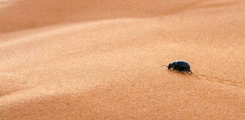 A 'sixth sense' for humidity helps insects stay out of climatic trouble