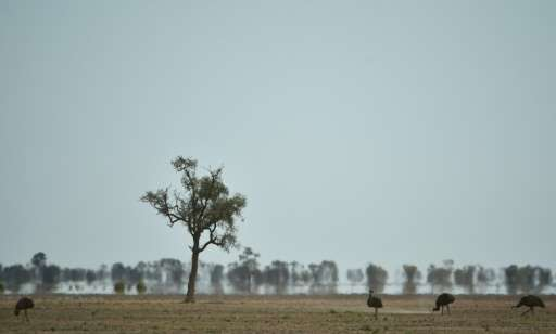A State of the Climate report in Australia warns of more heatwaves and rising land and sea temperatures, increasing the threat o