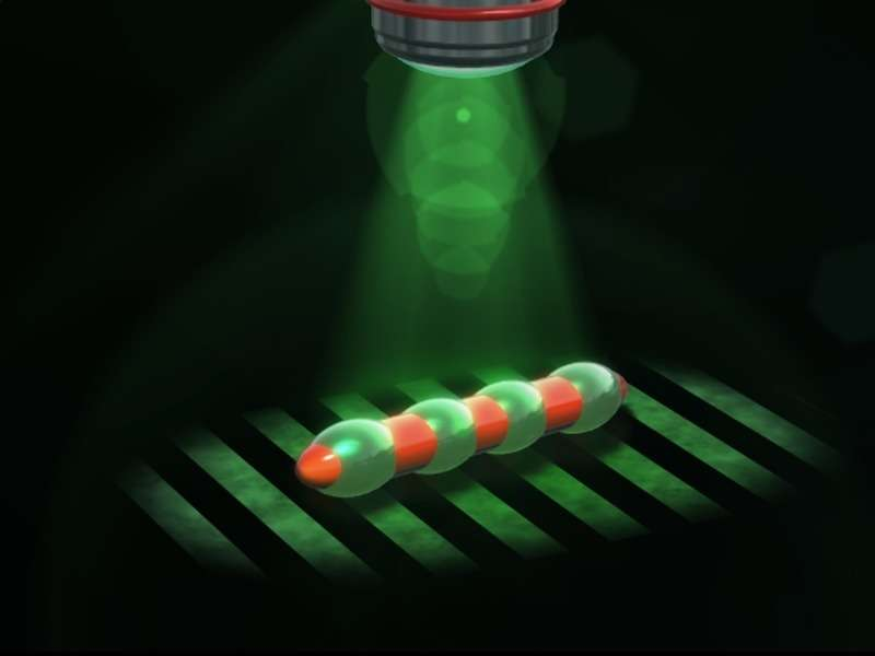 A swimming microrobot is driven by a light-induced peristaltic motion