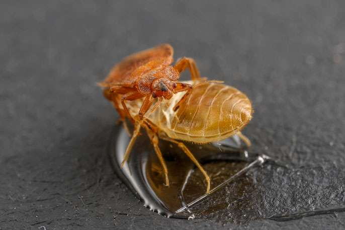 A trap for bedbugs?