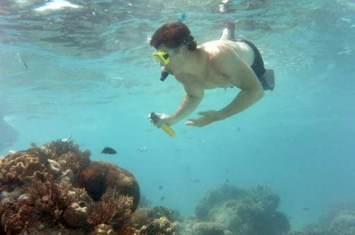 Australia could lose Aus$1 billion (US$747 million) in revenue if continued coral bleaching damages the Great Barrier Reef to th