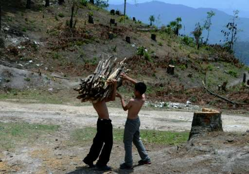 Authorities are clearing huge swathes of forest in La Tigra National Park, seven kilometers (five miles) northeast of Tegucigalp