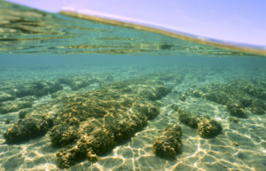 A window on Earth's first life forms—finding more stromatolites