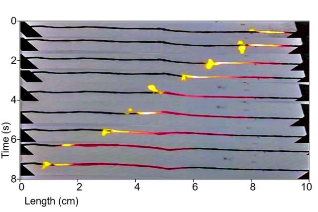 Battery substitutes produce current by burning fuel-coated carbon nanotubes like a fuse