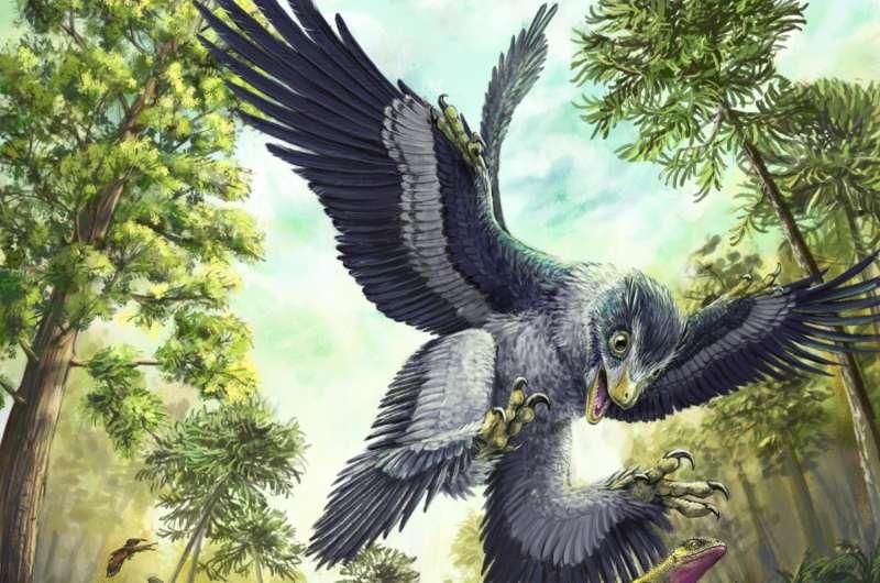 Beaked birds champions of the last mass extinction