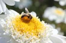 Bees use multiple cues in hunt for pollen