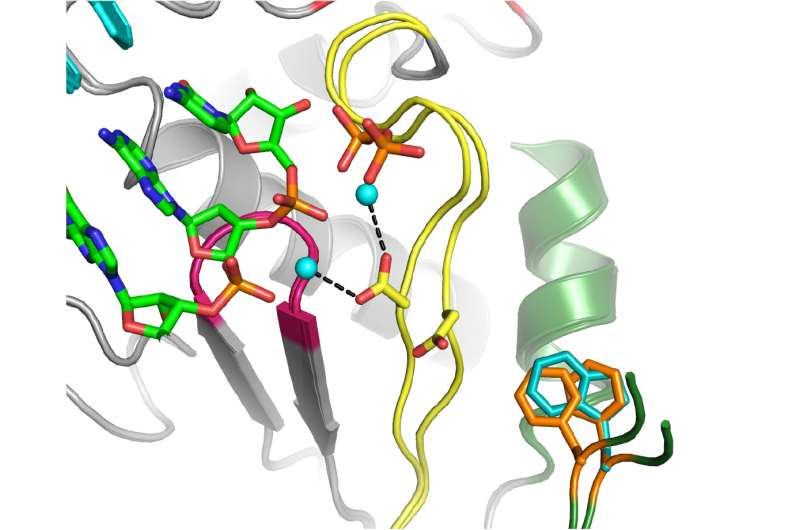 Biochemists feed 'poison pill' to deadly virus with a funny name