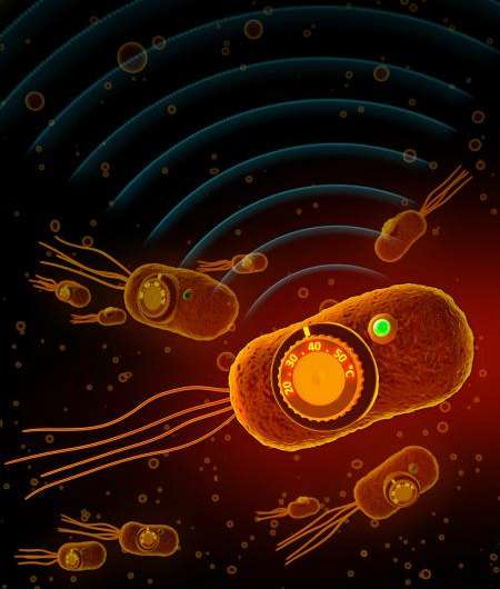 Biologists give bacteria thermostat controls