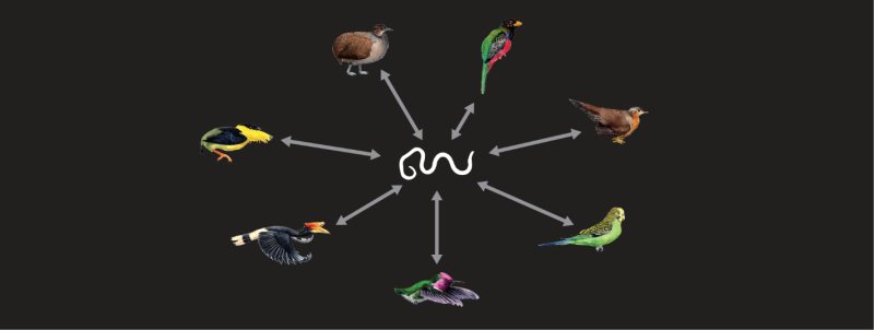 Bird genomes contain 'fossils' of parasites that now infect humans