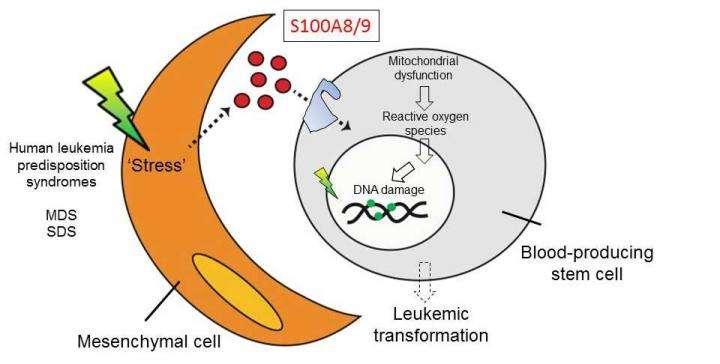 Bone marrow inflammation predicts leukemia risk
